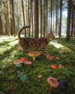 amongst_the_mushroom.jpg