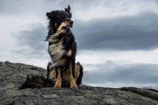 this_dog_is_just_maj.jpg