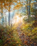 autumn_in_shenandoah.jpg